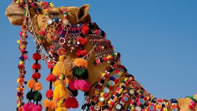 Rajasthan-IML-800x600 (3)