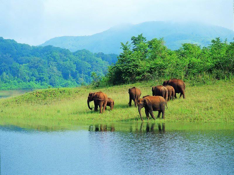 Periyar-Wildlife-Sanctuary-IML-Travel