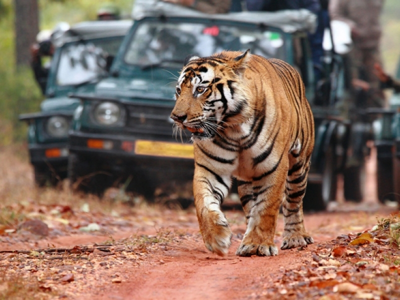 Ranthambore-national-park2-IML-Travel