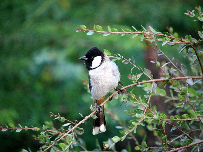 nawabganj-bird-sanctuary-IML-Travel-compressor