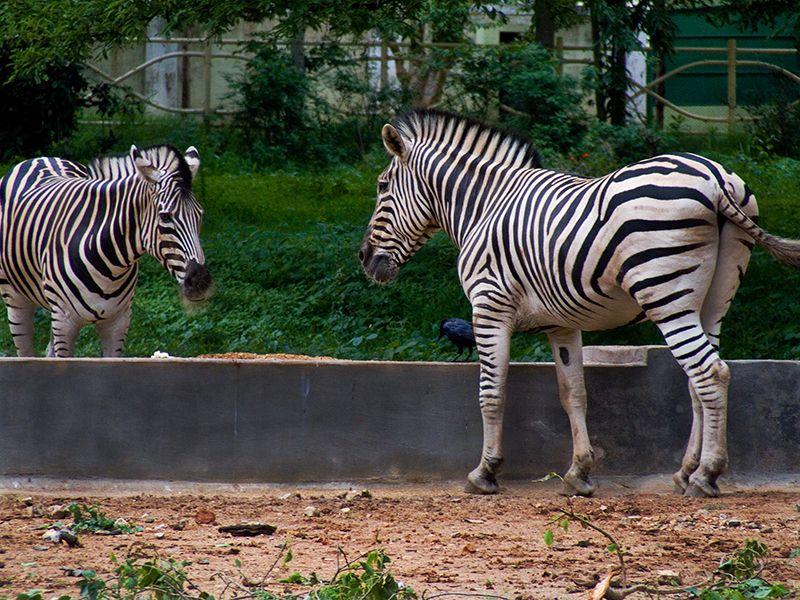 Allen-forest-zoo-kanpur-IML-Travel