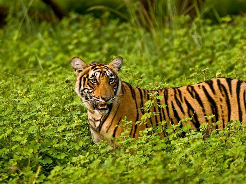 Wildlife-tours-IML-Travel